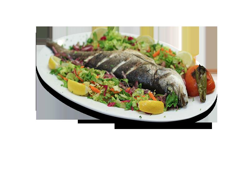 Mediterranean-Sea-Bass-Levrek
